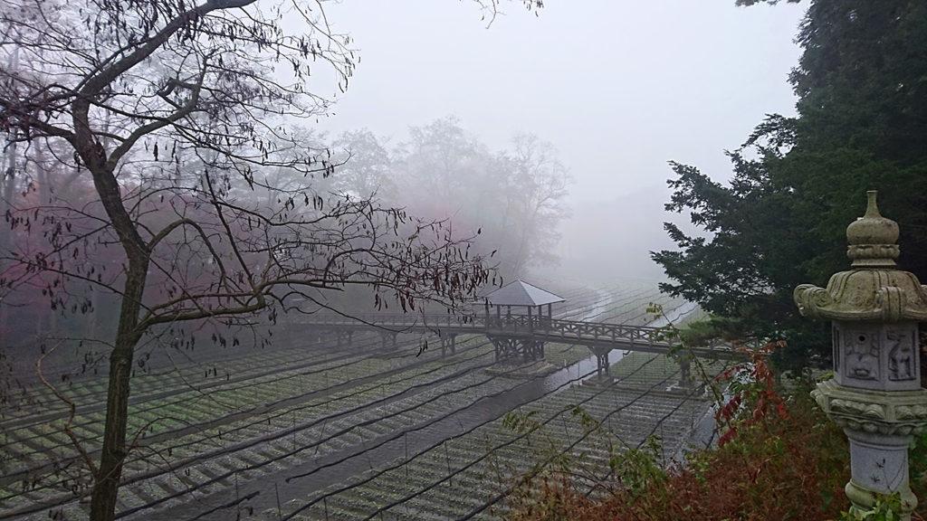 霧に包まれるわさび田と石灯篭