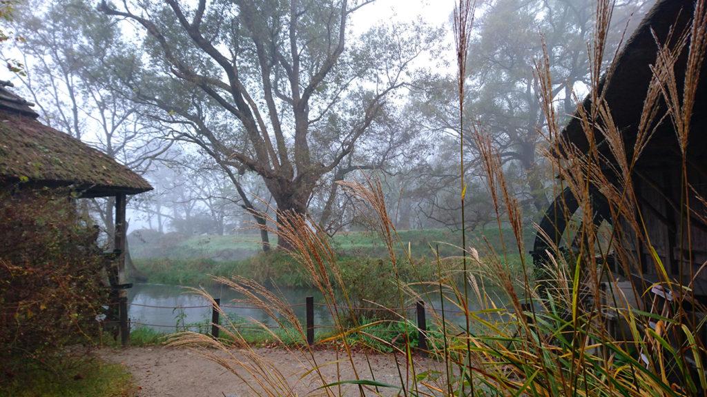 霧に包まれる大王わさび農場の水車小屋とススキ