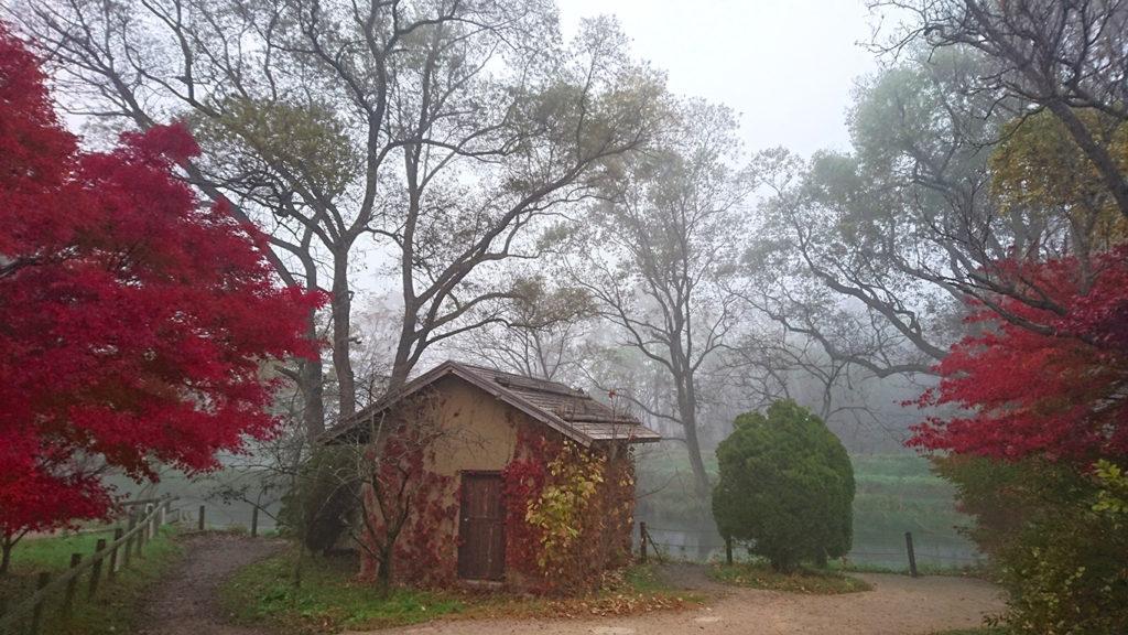 霧に包まれる大王わさび農場の水車小屋をカエデとツタの紅葉と一緒に。