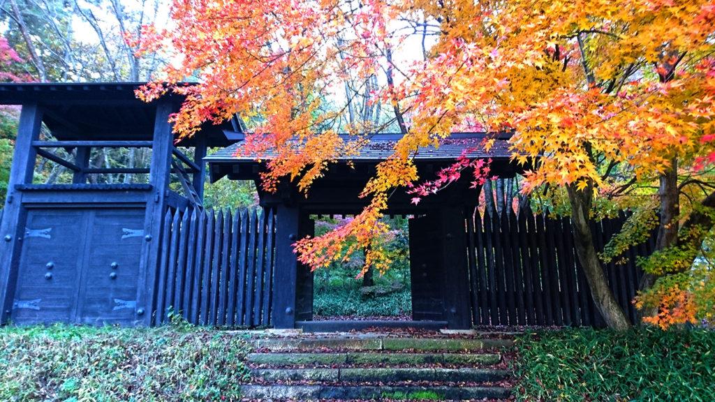 小岩嶽城址公園模擬門前のカエデの紅葉1