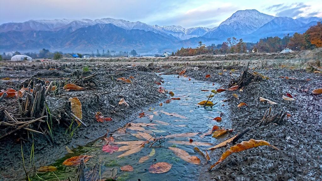 田んぼの水たまりにはった薄氷