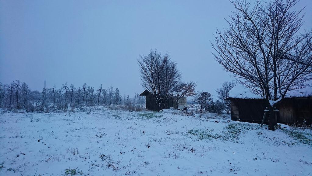 初雪を三郷のなごみ庵さんから