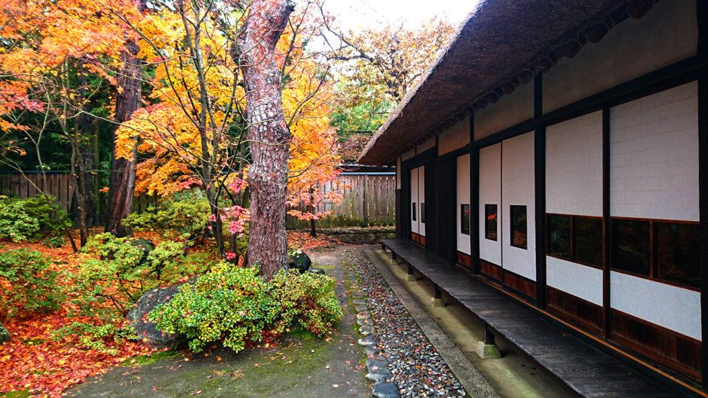 高橋節郎生家、縁側とカエデの紅葉1