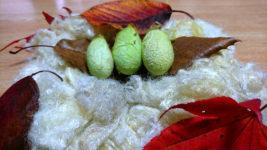 天蚕の繭と天蚕の真綿