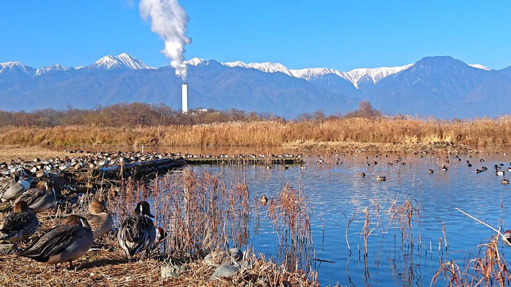 御宝田遊水池のカモと白くなった常念岳