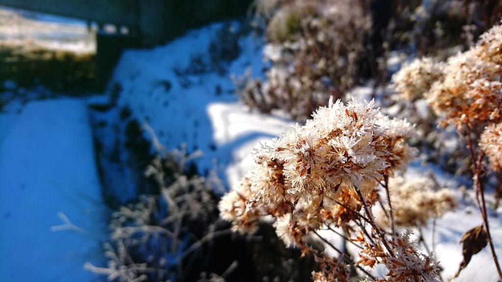 中綱湖畔の樹氷化していた枯草