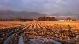 氷が張った田んぼの水たまり