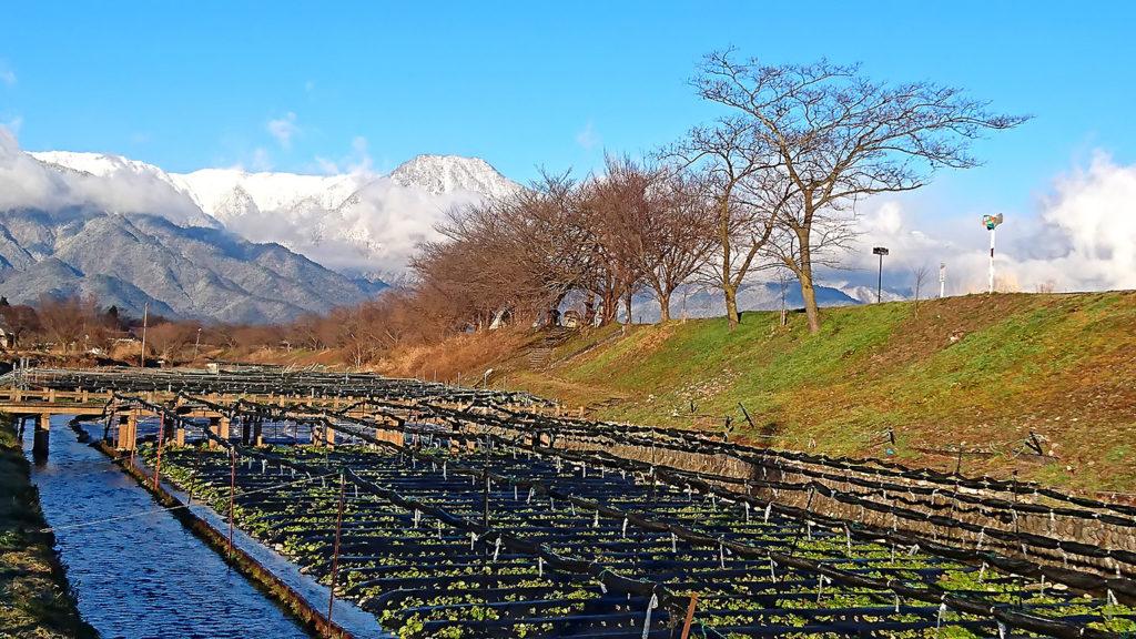 穂高川沿いのわさび田と有明山