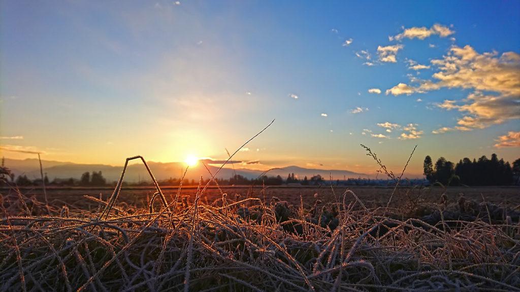 初日の出に輝く霜が降りた枯草