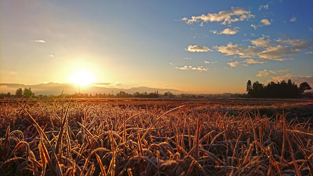 初日の出に黄金色に染まる風景