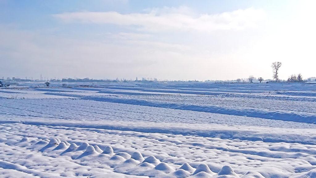 田んぼと畑の雪原1