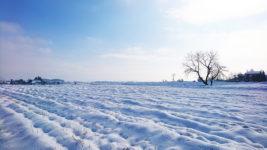 田んぼと畑の雪原2