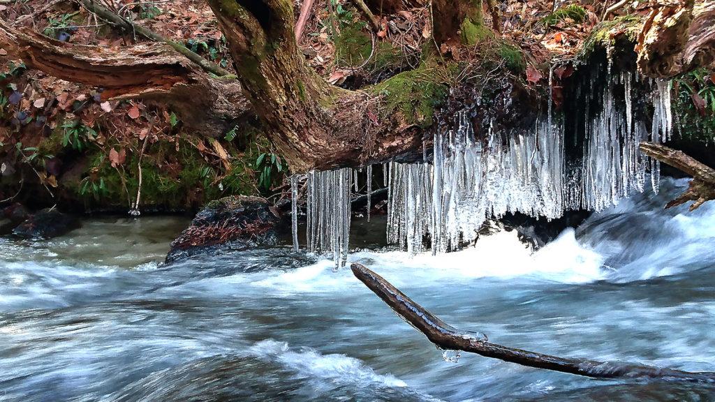 木の幹の下に垂れ下がる氷柱