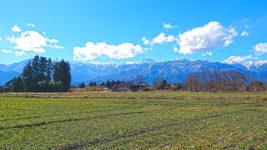麦畑の緑と常念岳