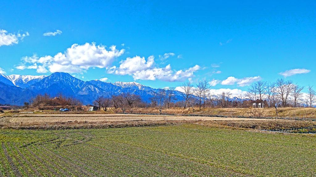 麦畑の緑と有明山