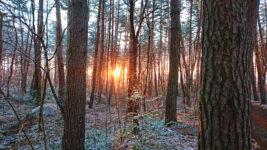 雪化粧した林の中に差し込む日の出頃の朝日