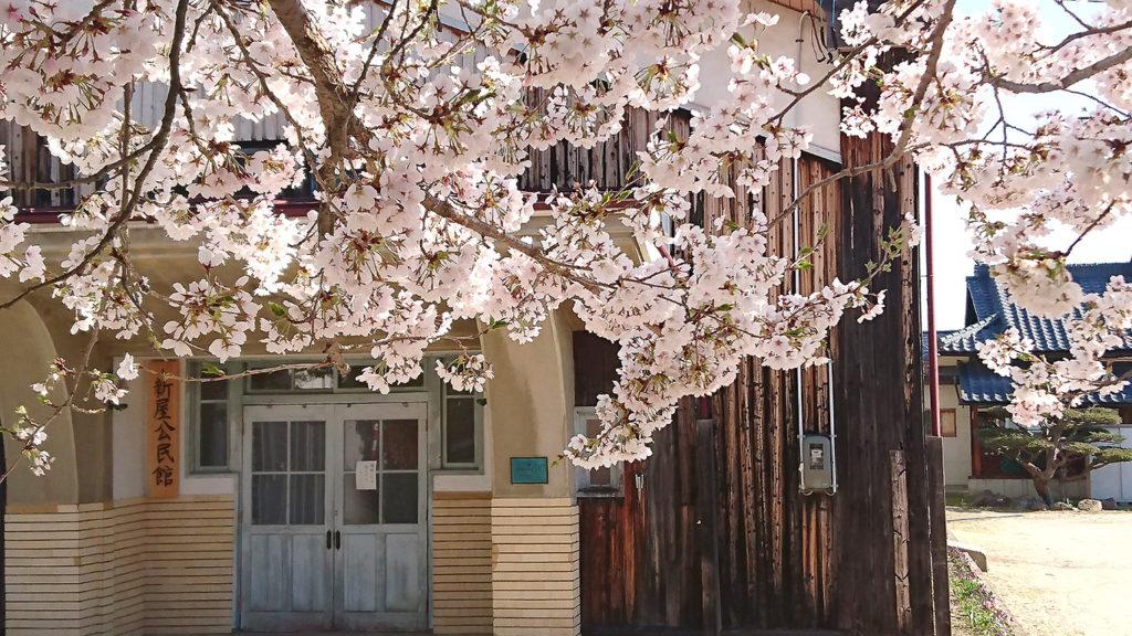 新屋公民館と桜