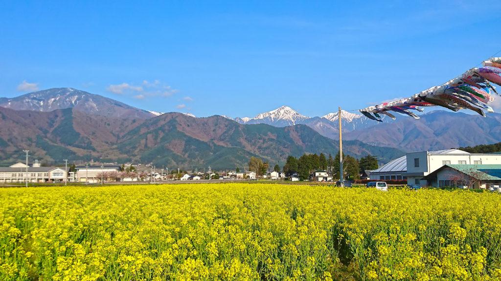 菜の花と常念岳