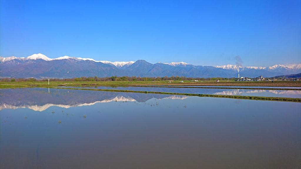 田んぼの水鏡1