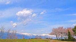 万水川沿いの桜と白い北アルプス