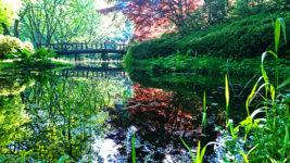 満願寺の新緑と光と水のコラボ