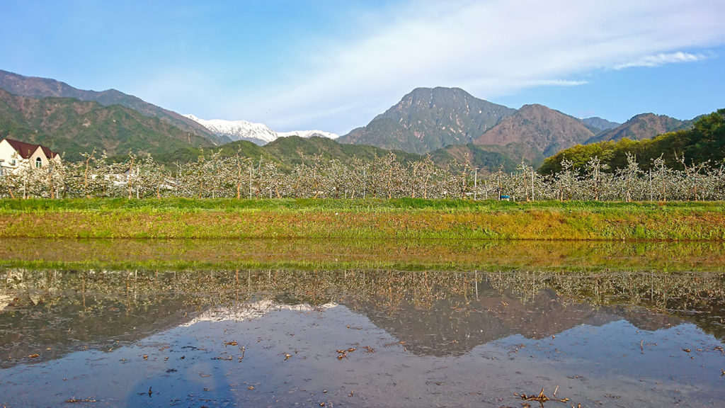 リンゴの花と有明山と水鏡