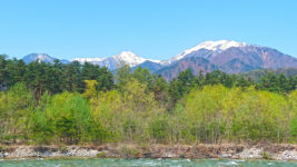 高瀬川の新緑と雪を被った山