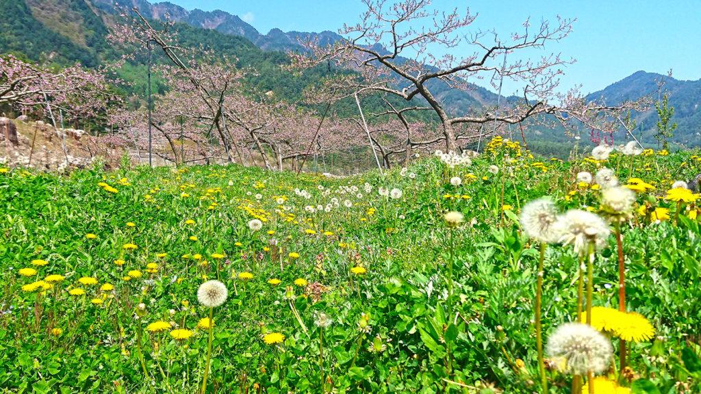 桃の花とタンポポの花