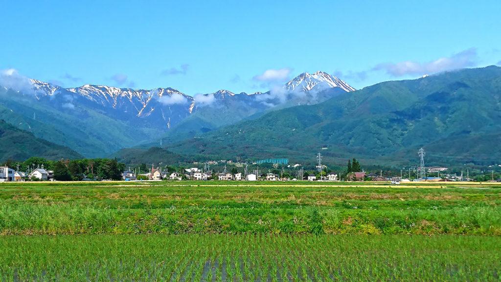 緑が濃くなってきた水田と常念岳