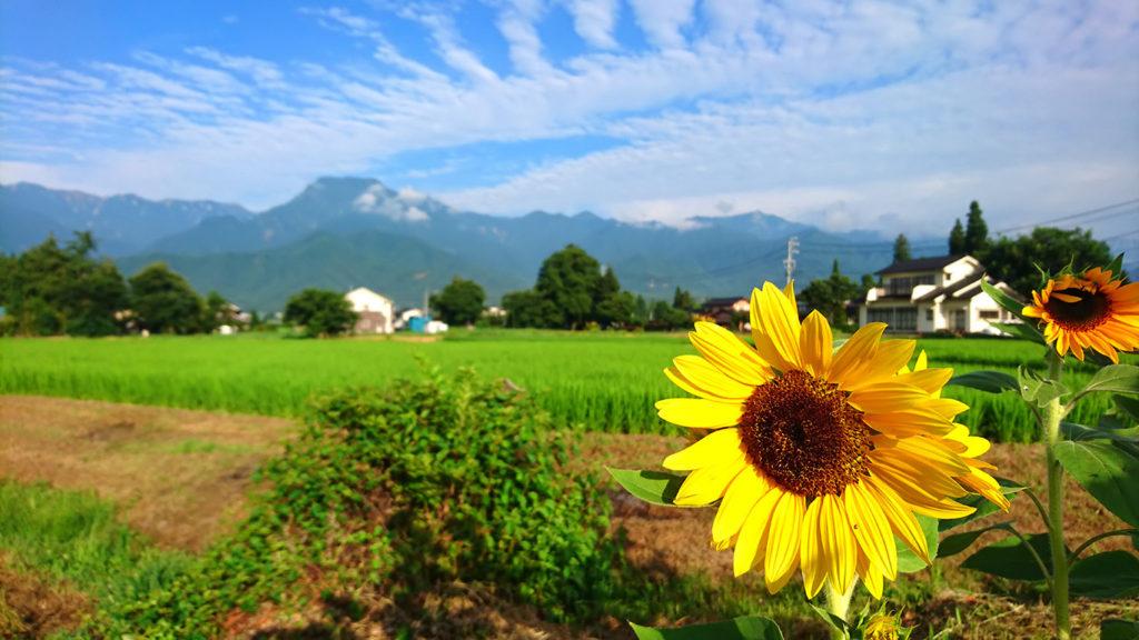 早朝の細野駅からの風景