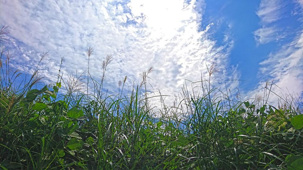 秋めいた空とススキの穂2