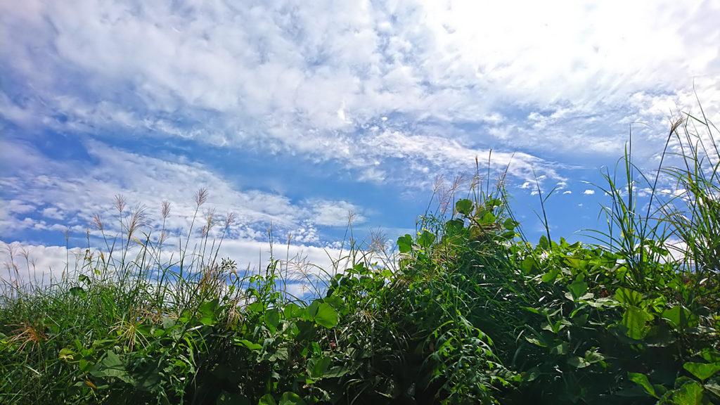 秋めいた空とススキの穂1
