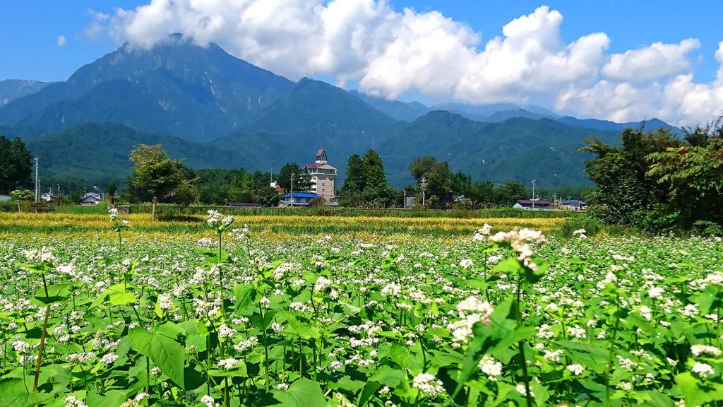 蕎麦の花と江戸川荘と有明山