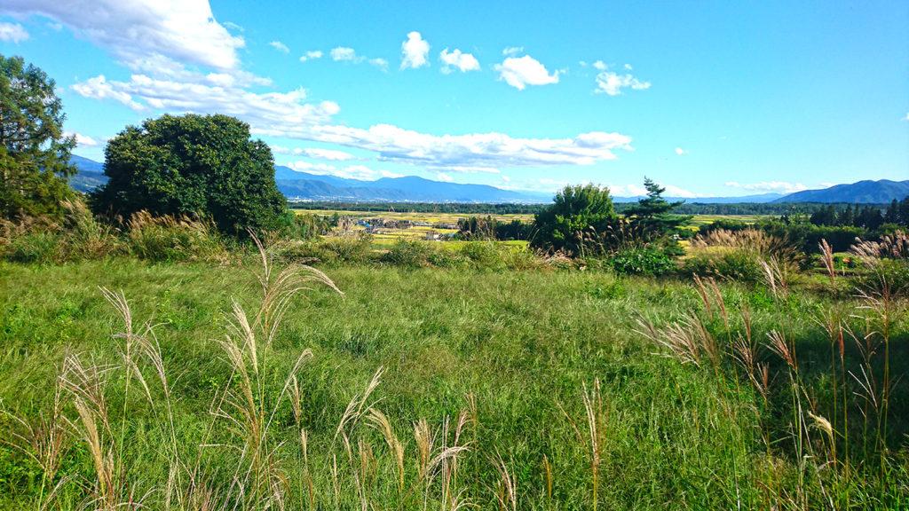 桜沢遺跡公園から見るススキの穂と田園風景