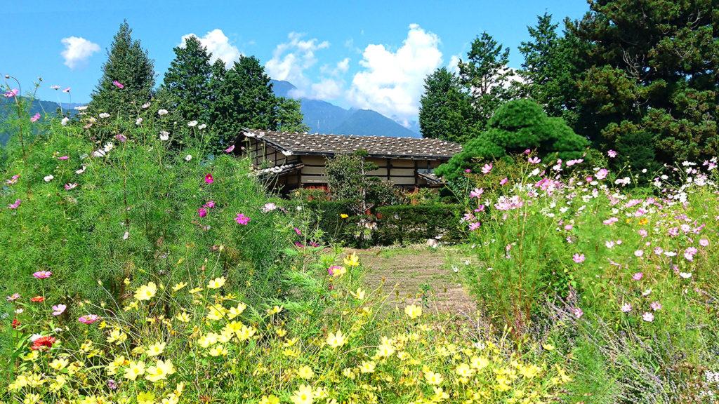 曽根原家住宅と秋桜