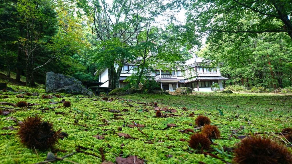 鐘の鳴る丘集会所の苔と栗のイガ