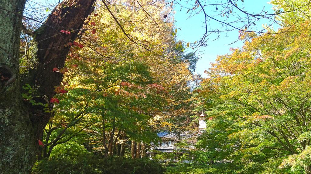 紅葉の始まった鐘の鳴る丘集会所1