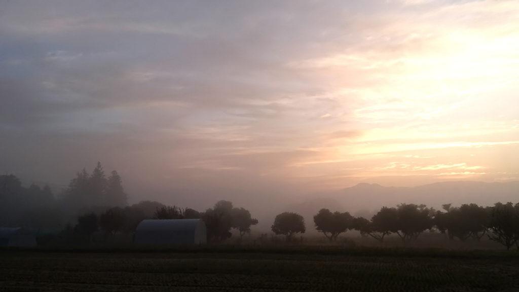 早朝の霧の風景
