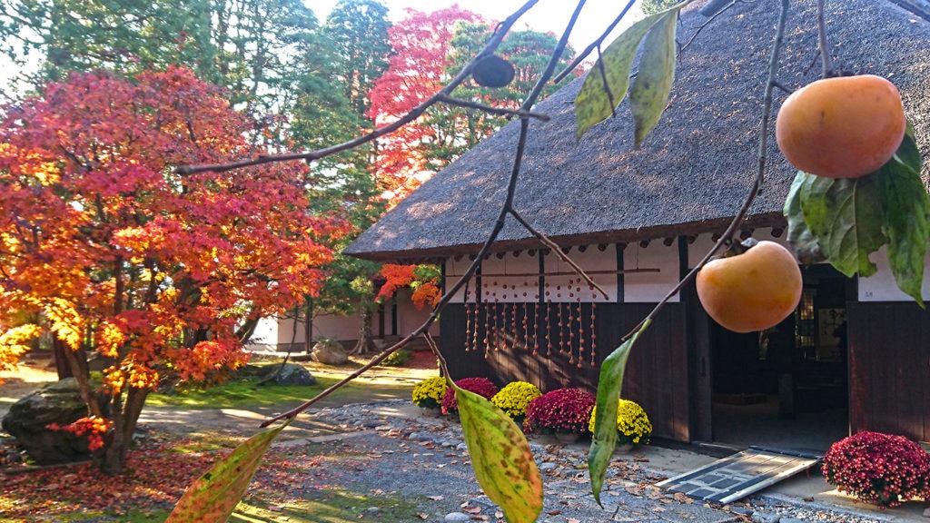 柿の実と紅葉と高橋節郎生家