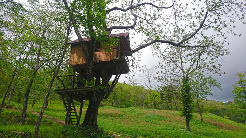 カミツレ研究所向かいのツリーハウス