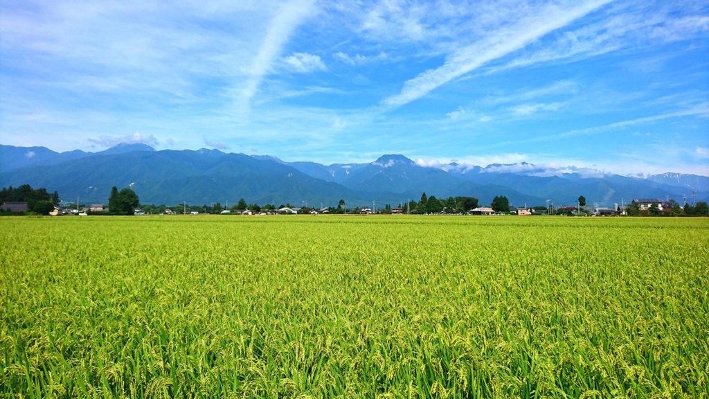 有明山と田んぼ
