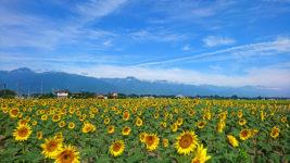 有明山と向日葵畑