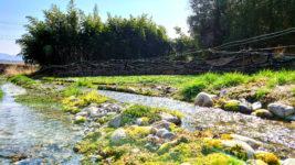 春のわさび田の用水路