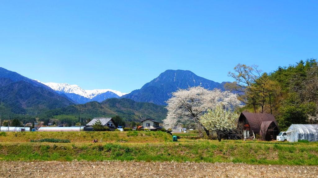 有明山と桜