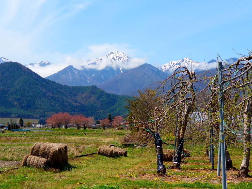 俵とリンゴの木と常念岳