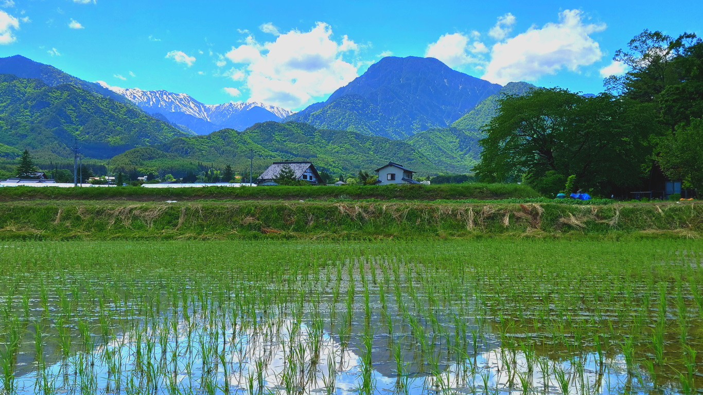 田んぼと有明山と大天井岳