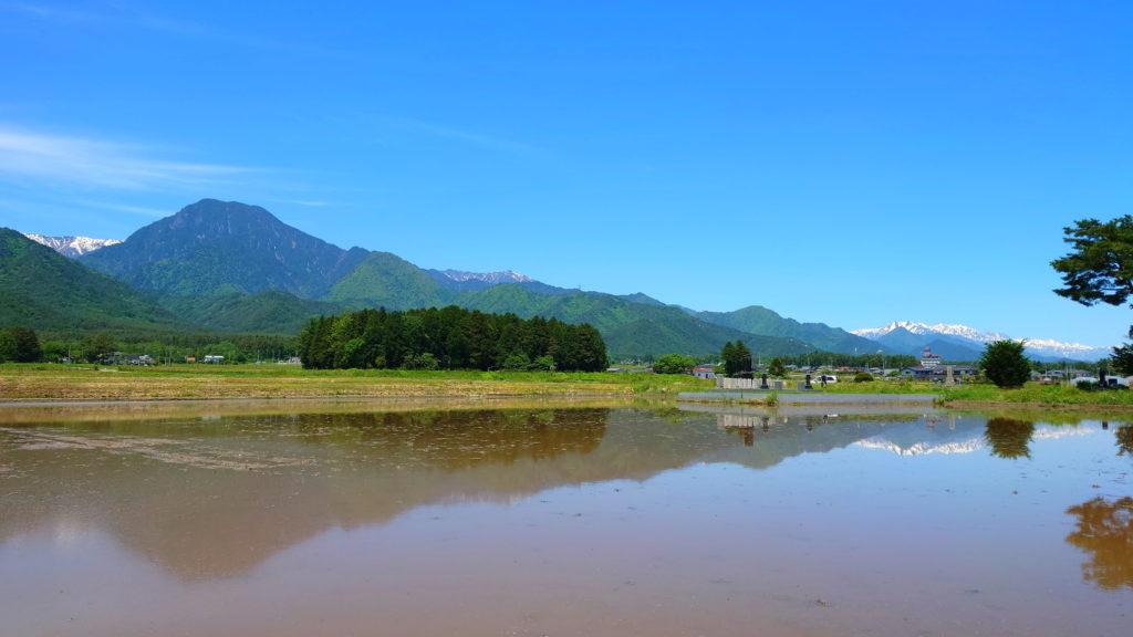 田んぼの水鏡と有明山