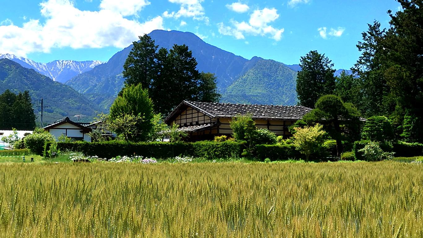 曽根原家住宅前の小麦畑と有明山