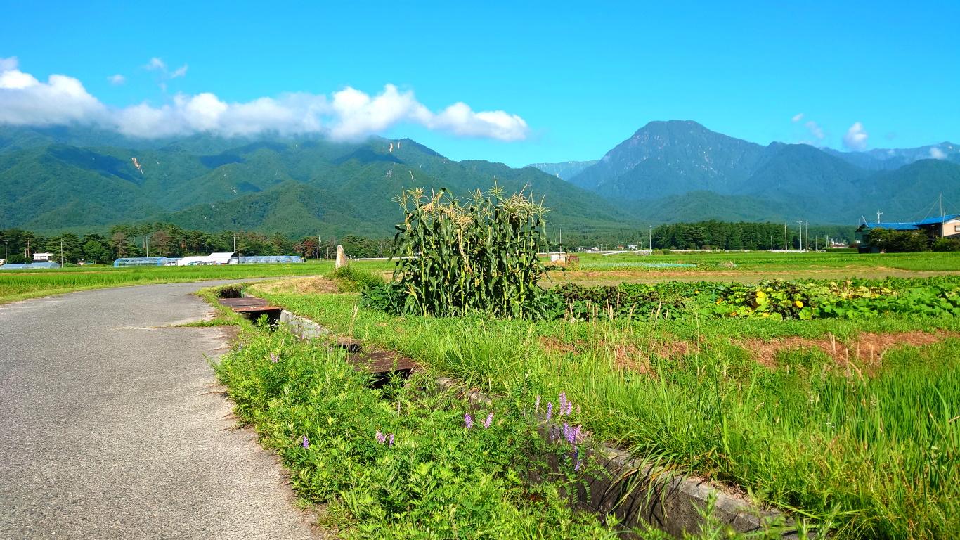 夏の畑と有明山