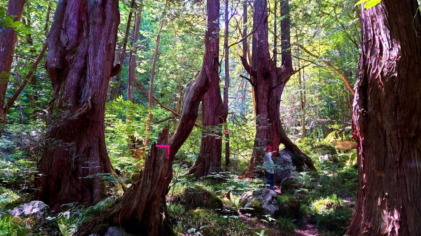 原生林に佇む